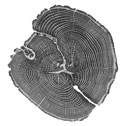 Wood moss