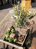 plants in wooden pots 21.4.19.jpg