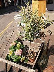 plants in wooden pots 21.4.19.jpg