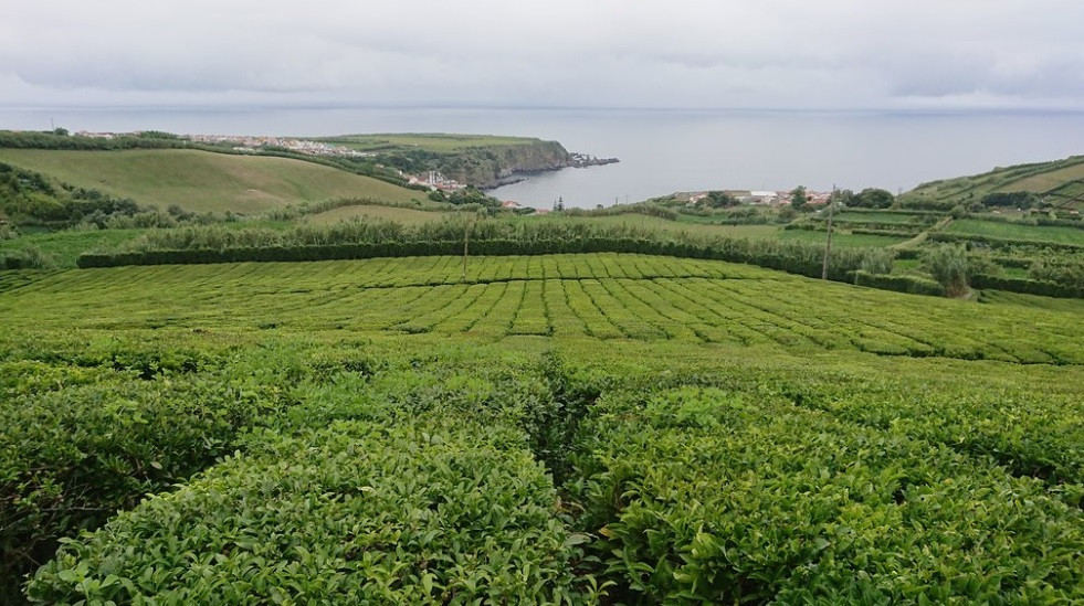 Tea plantage São Miguel Wedding venue