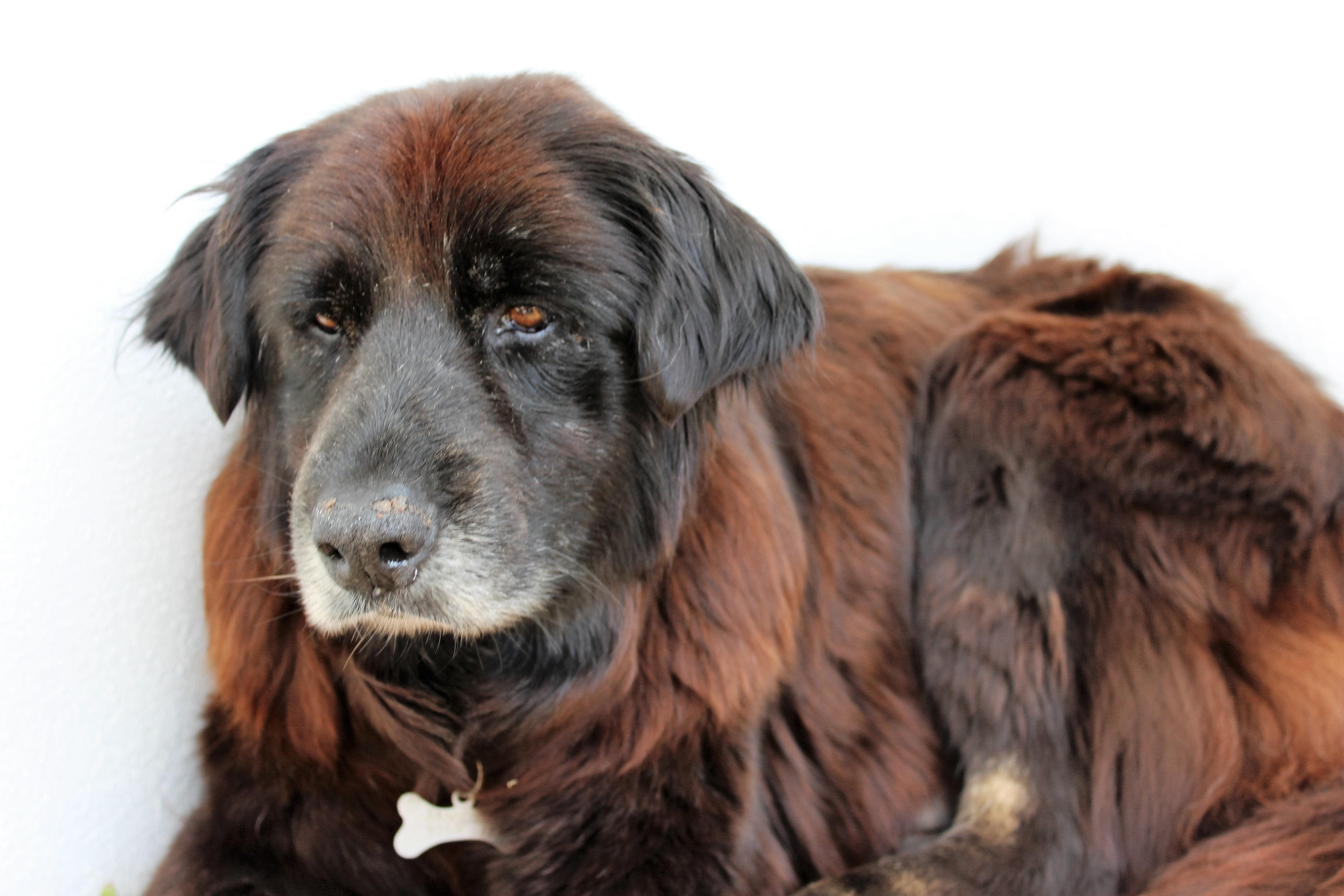 De mooiste hond van Portugal
