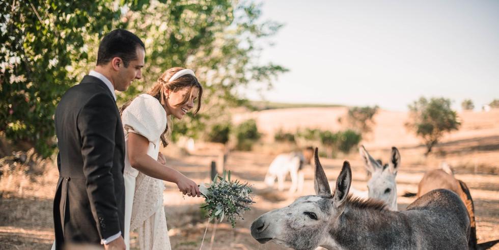 Donkey eats bridalbouquet