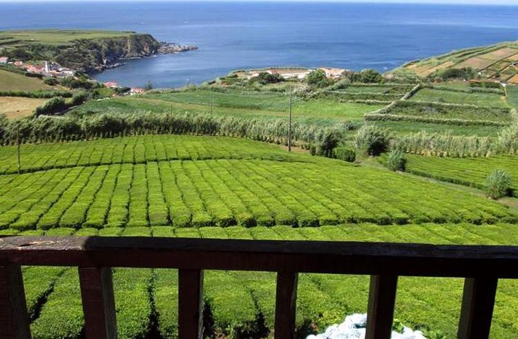 porto-formoso-tea-plantation.jpg
