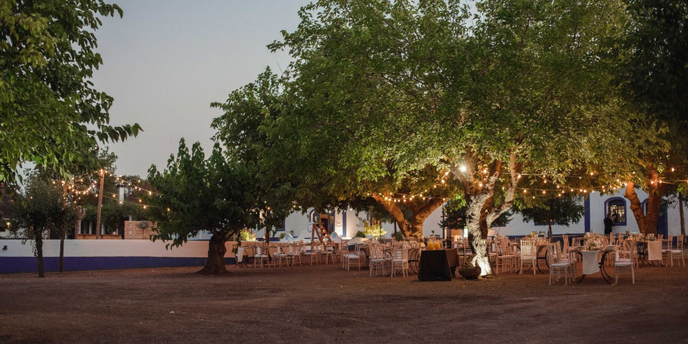Cork oaks with fairylights for outdoor wedding cocktail