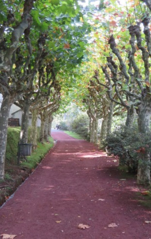Entrance from Wedding venue in São Miguel with big trees