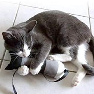 Jeux et Jouets pour chat