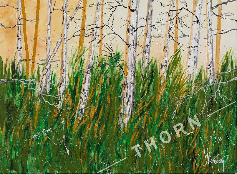 White Bark Trees by Karen Thornberg