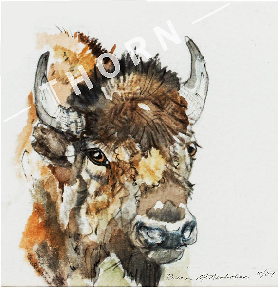 Buffalo by Brian McNicholas