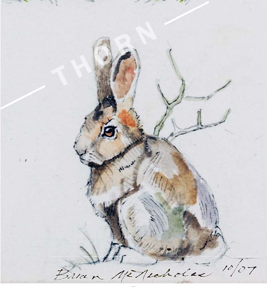 Rabbit by Brian McNicholas