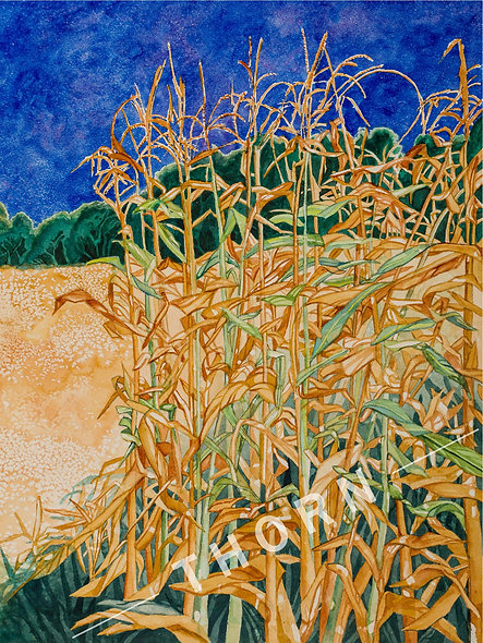 Corn Field by Karen Thornberg
