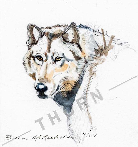 Lone Wolf by Brian McNicholas