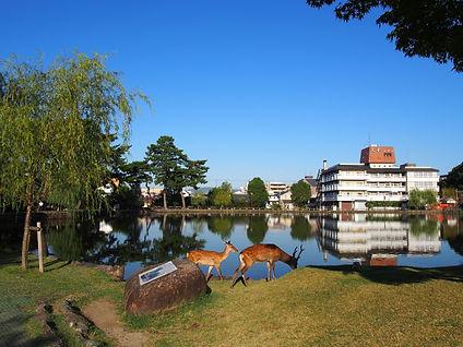 猿沢池周辺.jpg