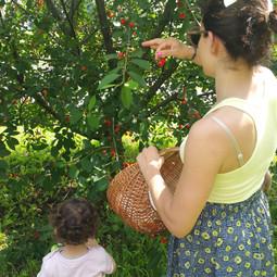 gita all'albero di amarene