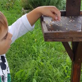 semini nella mangiatoia