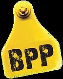 certificado BPP-01.png