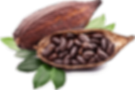 fruto-cacao.png