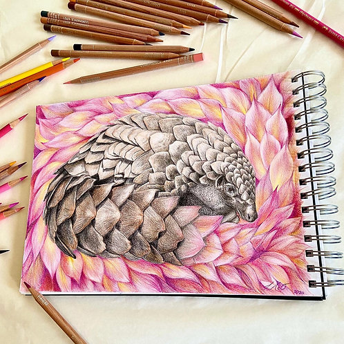 Pangolin (The Cute Collection)