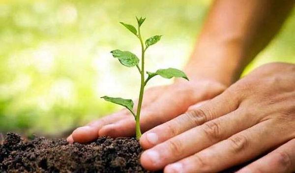 planting-a-tree.jpg