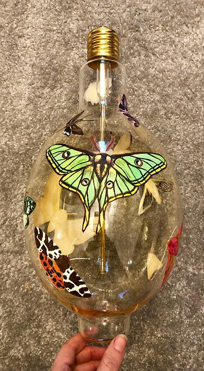 Lepidoptera Light