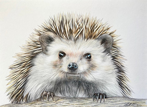 Hedgehog (The Cute Collection)