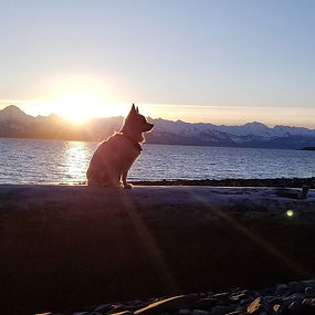 Sunsets and chihuahuas_#juneaualaska #ju