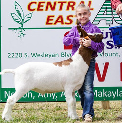 The 2nd annual Blue & Gold Livestock Sho