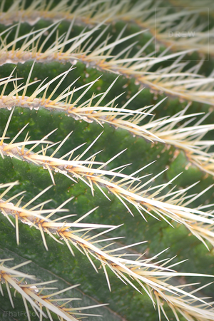 greeny-cactus-stripes.png