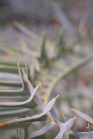 dragon-tail-cactus-curve.jpg