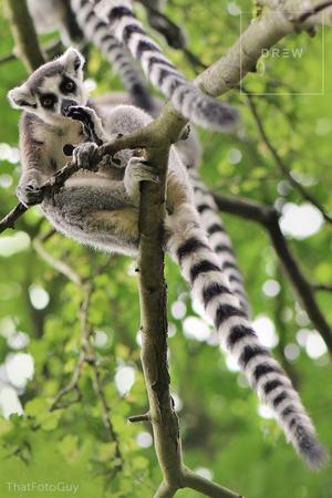 lemurpost2.png
