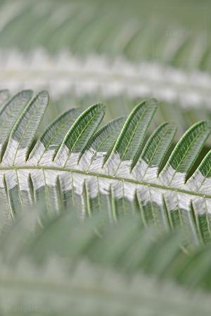 Greeny-leafy-stripes.png