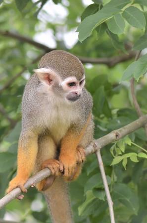 squirre-monkey_2x.jpg