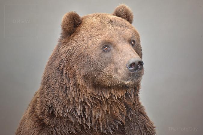 bear-portrait.png