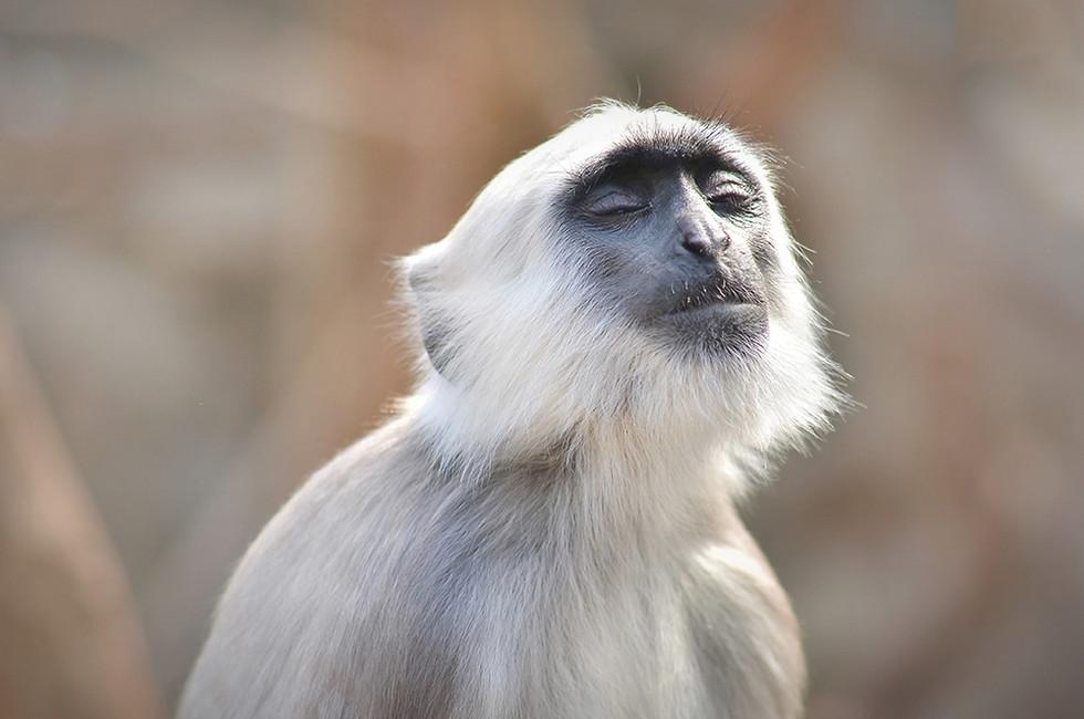 monkey-chill.jpg