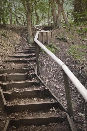 woodsteps.png