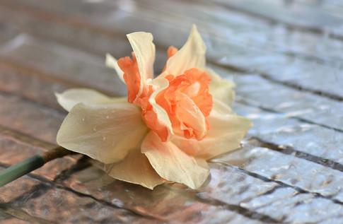 daffodil-stream_2x.jpg