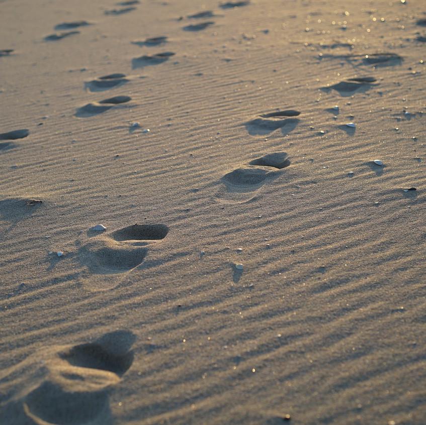 beach-630466_1920