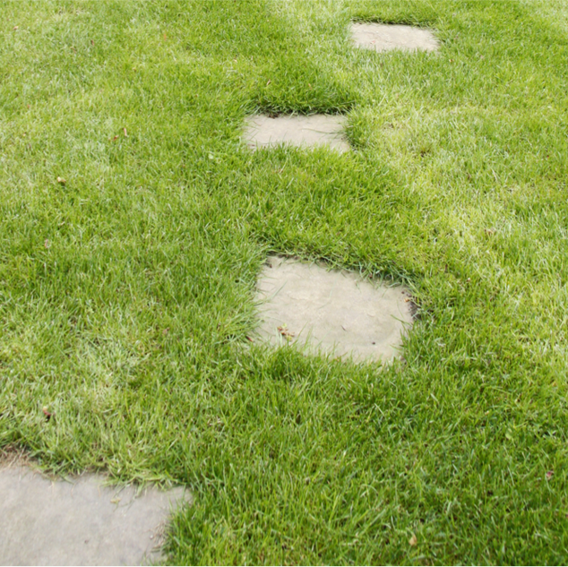 Stepping stones in the lawn
