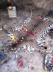 Jaguar Skin San Pedro Ceremony