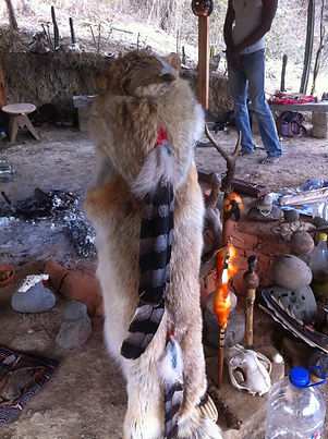 Shaman Coyote Skin With Eagle Feathers