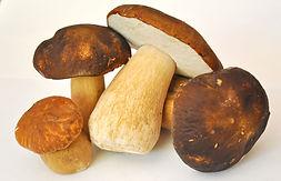 mushroom-913499.jpg