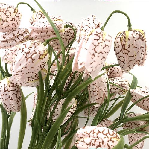 Fritillaria textil