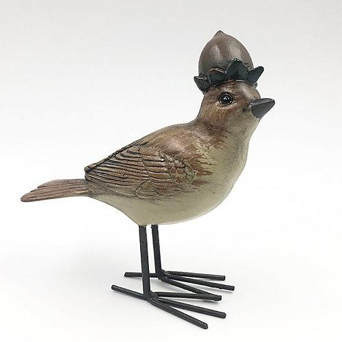 Vogel mit Nusskrone