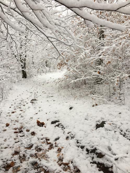 Serene Winter Trail