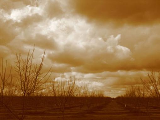 04-stormskyorchardrowcentralva.jpg