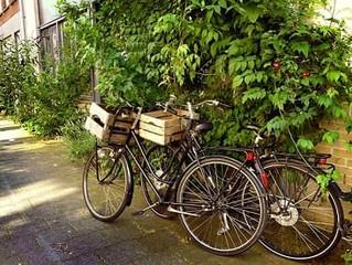 Elektryczne rowery Cargo w Gdyni