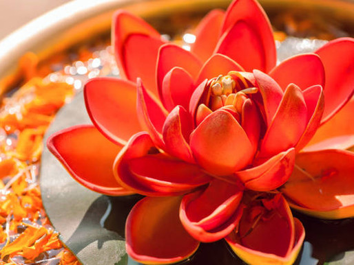A brief overview of the Sacral Chakra and tips for supporting your emotional resilience.