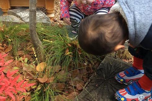 Exploring natual environment leaves tree grass