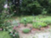 herb garden2.JPG