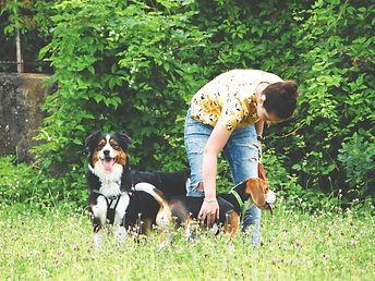 berger australien et beagle