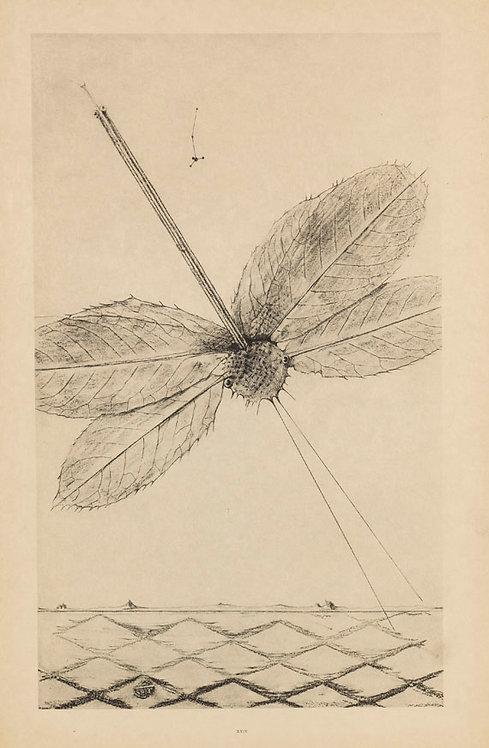Ernst, Max, Histoire naturelle. Paris, (J. Bucher) 1926. Sur Japon.